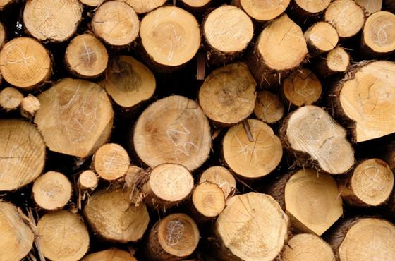 木の家はあたたかさだけでなく、湿度も調整してくれます。 また、建築材ごとにいろんな効果もあります。